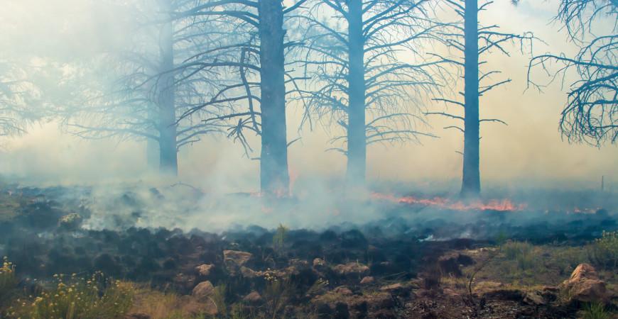 Wildfire Season and Homeowners Insurance Pasadena CA