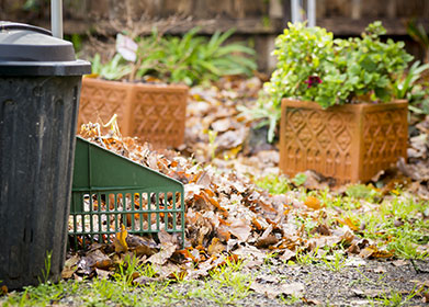 Fall Gardening Tips for Homeowners
