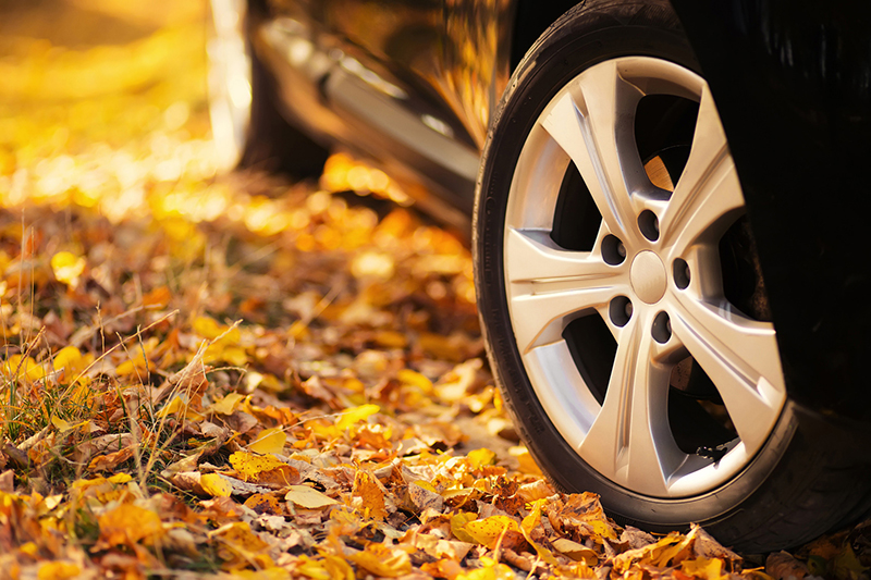 Is Your Auto Insurance Updated for Fall?