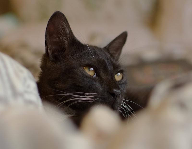 black cat on blanket
